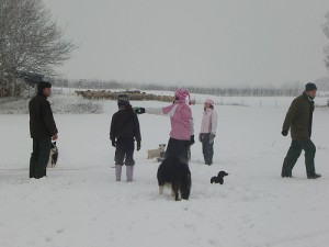 snow, people and dogs